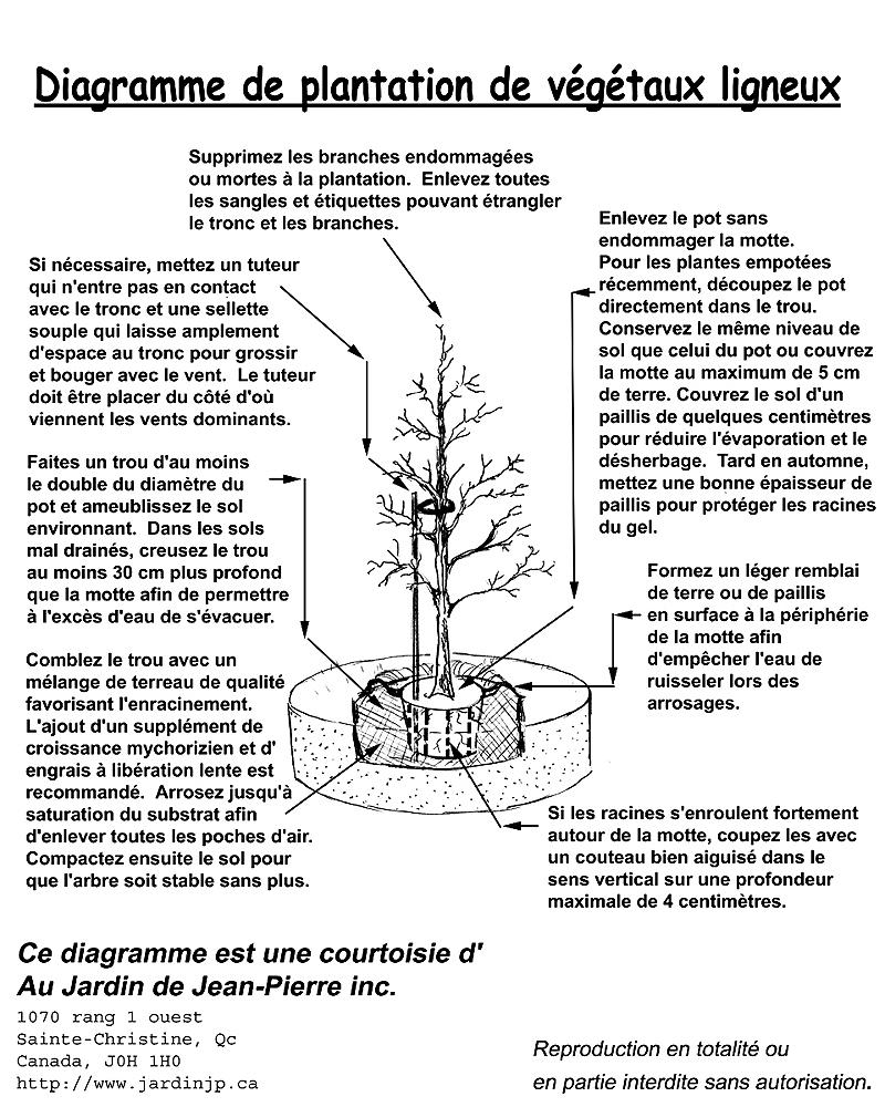 Comment Planter Un Arbre Fruitier comment planter un arbre